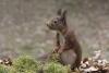 eekhoorntje 3-5055.jpg