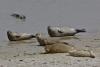 zeehondje 2-0993.jpg