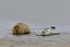 zeehondje 8-1175.jpg